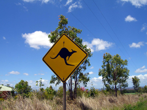 Australien Känguru